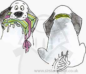 Front n Back - Birthday Beagle