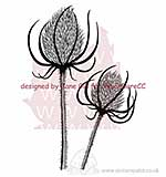 Clear Magic Singles - Teasels