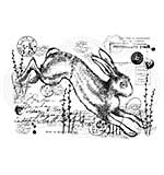 Vintage Hare, Woodware Clear Singles Stamp [1019]