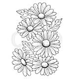Woodware Clear Singles Five Daisies Stamp [WW2001]