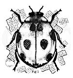 Woodware Francoise Read Ladybird 4 in x 4 in Clear Stamp