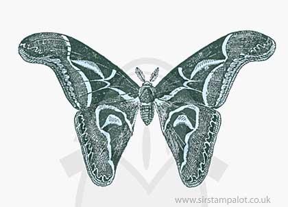 OT13 Magnolia - Big Butterfly