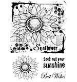 SO: Woodware Clear Singles Stamp - Sunflower Sketch [WW1804]