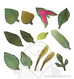 SO: Susans Garden Thinlits Dies - Leaves Garden