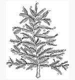 Molly Blooms - Christmas Tree No Pot